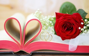 Картинка роза, книга, золотые, свадьба, flowers, обручальные кольца, wedding rings