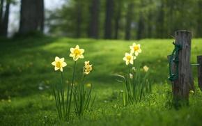Картинка поле, цветы, ограда, grass, trees, nature, flowers, landscapes