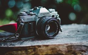 Картинка макро, Canon, камера, фон