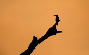 Обои дерево, фон, птица