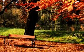 Обои дерево, осень, парк, лавочка, пруд