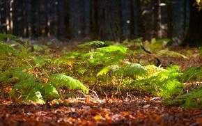 Картинка зелень, лес, свет, деревья, солнечно, папоротник