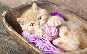 Картинка клубок, рыжий, котёнок, нитки
