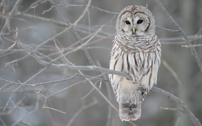 Обои дерево, сова, серый, зима, ветви, осень
