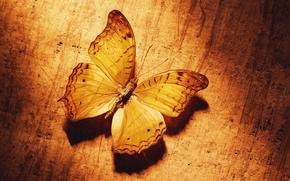 Картинка желтый, Бабочка