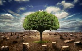 Картинка небо, дерево, пни