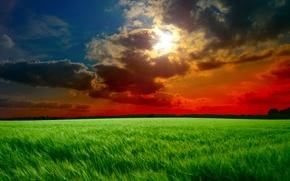 Обои тучи, лучи, поле, солнце, небо, трава, зеленые, колосья, облака, закат