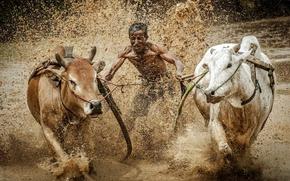 Картинка гонка, спорт, грязь, быки