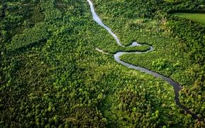Картинка лес, природа, река, Canada, Southern Ontario