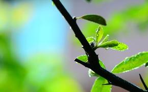 Картинка листья, вода, макро, зеленый, роса, фон, widescreen, обои, ветка, размытость, листик, wallpaper, листочек, широкоформатные, background, …