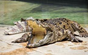 Картинка crocodile, mouth, reptile, teeth