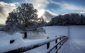 Обои зима, небо, облака, снег, деревья, природа, дерево, забор