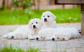 Картинка собаки, отдых, щенки