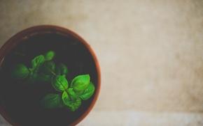 Картинка листья, растение, зеленые, горшок