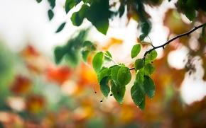 Картинка капли, макро, листва, ветка, весна