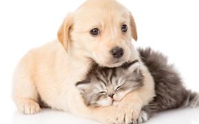 Картинка малыши, щенок, котенок