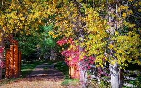 Обои осень, листья, солнце, деревья, парк, столбы, забор, дорожка