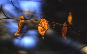 Картинка осень, листья, макро, природа, сухие, веточки