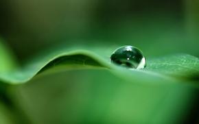 Обои лист, зеленый, капля