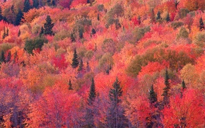 Обои склон, осень, лес, багрянец