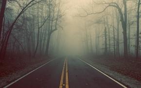 Картинка дорога, лес, деревья, туман, трасса
