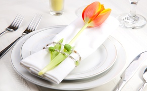 Картинка цветок, тюльпан, тарелка, салфетка, сервировка, столовые приборы