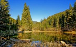 Картинка лес, природа, озеро, фото, лодка, Закарпатье