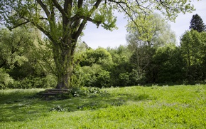 Картинка Зелень, Природа, Поле, Трава, Лето, Nature, Grass, Green, Summer, Field