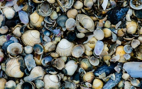 Картинка sea, rocks, shells