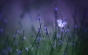 Картинка поле, фиолетовый, трава, макро, цветы, зеленый, фон, Бабочка, размытость, сиреневые