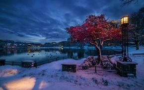 Картинка зима, снег, огни, Норвегия, фонарь, Ставангер, Ругаланн, вечер сумерки