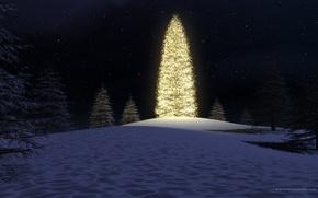 Обои огни, елка, ночь, лес