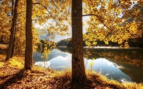Картинка river, trees, water, beautiful, leaves, hills, sunrise, reflection, mist, fall