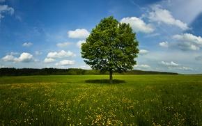 Картинка поле, природа, лето, деревья, трава, весна