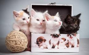Картинка клубок, котята, коробочка