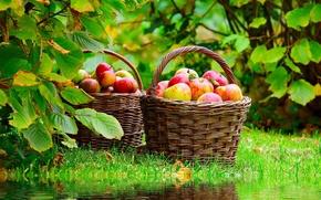Обои природа, пруд, отражение, корзина, яблоки, nature, лукошко, спелые, mirroring, Red apples