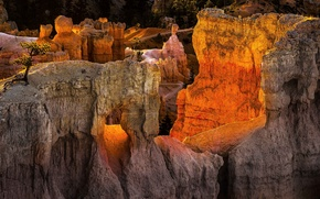 Картинка закат, горы, дерево, скалы, Юта, США, Bryce Canyon National Park