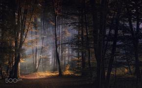 Обои осень, лес, свет, природа