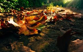 Картинка дорога, осень, лес, листья, деревья, закат, природа, парк, восход, colors, colorful, forest, road, trees, nature, …
