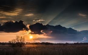 Картинка поле, солнце, облака, деревья, закат, дерево