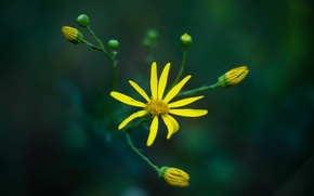 Картинка flower, macro, flora, mmd, helios