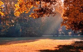 Картинка осень, свет, деревья, парк, листва, тень