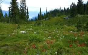 Картинка лес, деревья, цветы, горы, камни, луг, Canada, British Columbia, канада