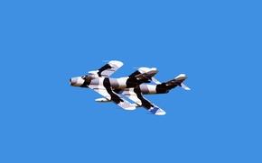 Обои Небо, Полет, Авиация, Камуфляж, реактивный истребитель, МиГ-17, Два, Микоян, Fresco, Гуревич, Пилотаж