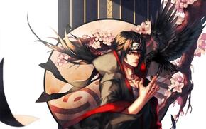 Картинка ворон, naruto, art, sharingan, shinobi, itachi uchiha, nona