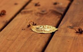 Обои лист, осень, капля