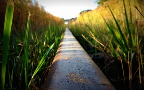 Картинка трава, железная дорога, рельс
