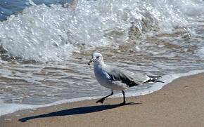 Картинка море, птица, волна