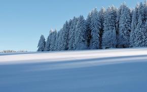 Картинка зима, иней, лес, снег, домик