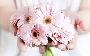 Обои растения, розовые, руки, цветы